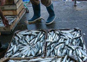 la Reducción drástica en la cuota de pesca de la sardina también llega a Isla Cristina