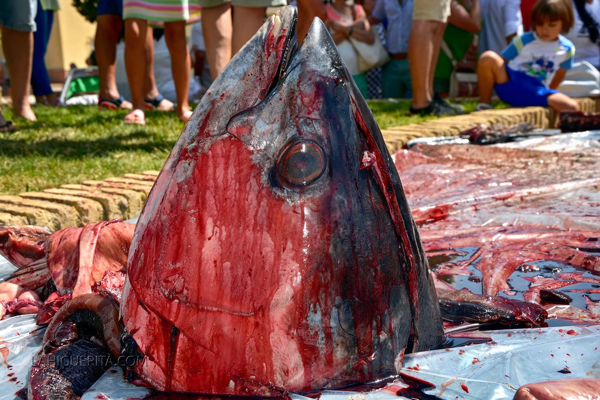 VII Ronqueo y degustación del Atún en la Plaza de la Almadraba de Isla Cristina