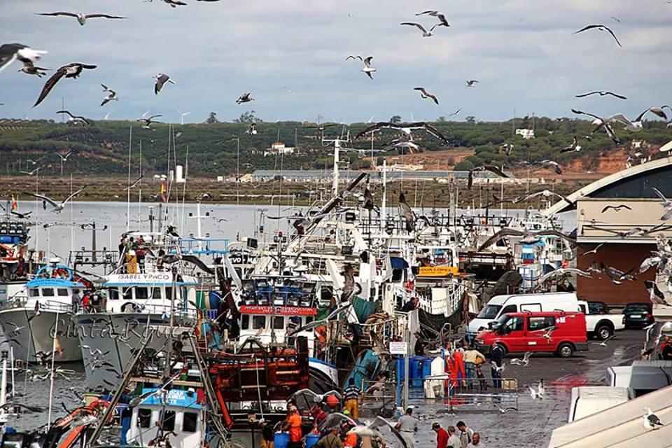 La corvinata real llega a aguas del Golfo de Cádiz